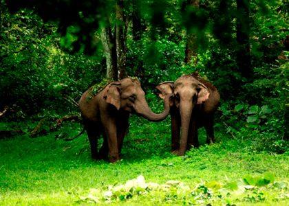 Aralam-Wildlife-Sanctuary1