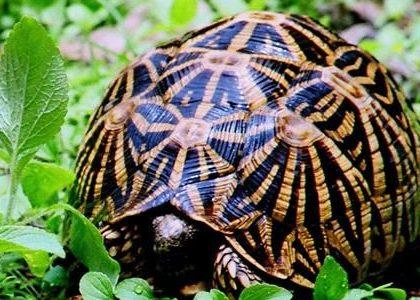 Chinnar-Wildlife-Sanctuary1