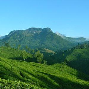 Munnar | Munnar Tour Packages | Munnar Honeymoon Package | Munnar Stay