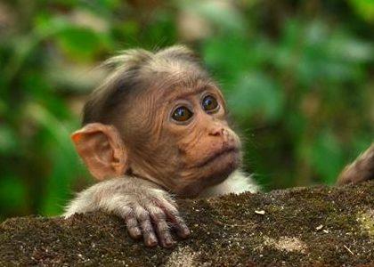 Muthanga-Wildlife-Sanctuary1