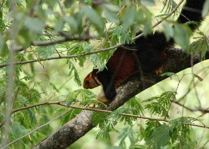 Parambikulam-Wildlife-Sanctuary2