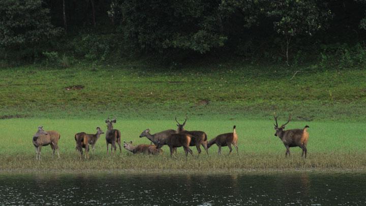 Thekkady Wildlife Sanctuary | periyar national park | wildlife reserves in india